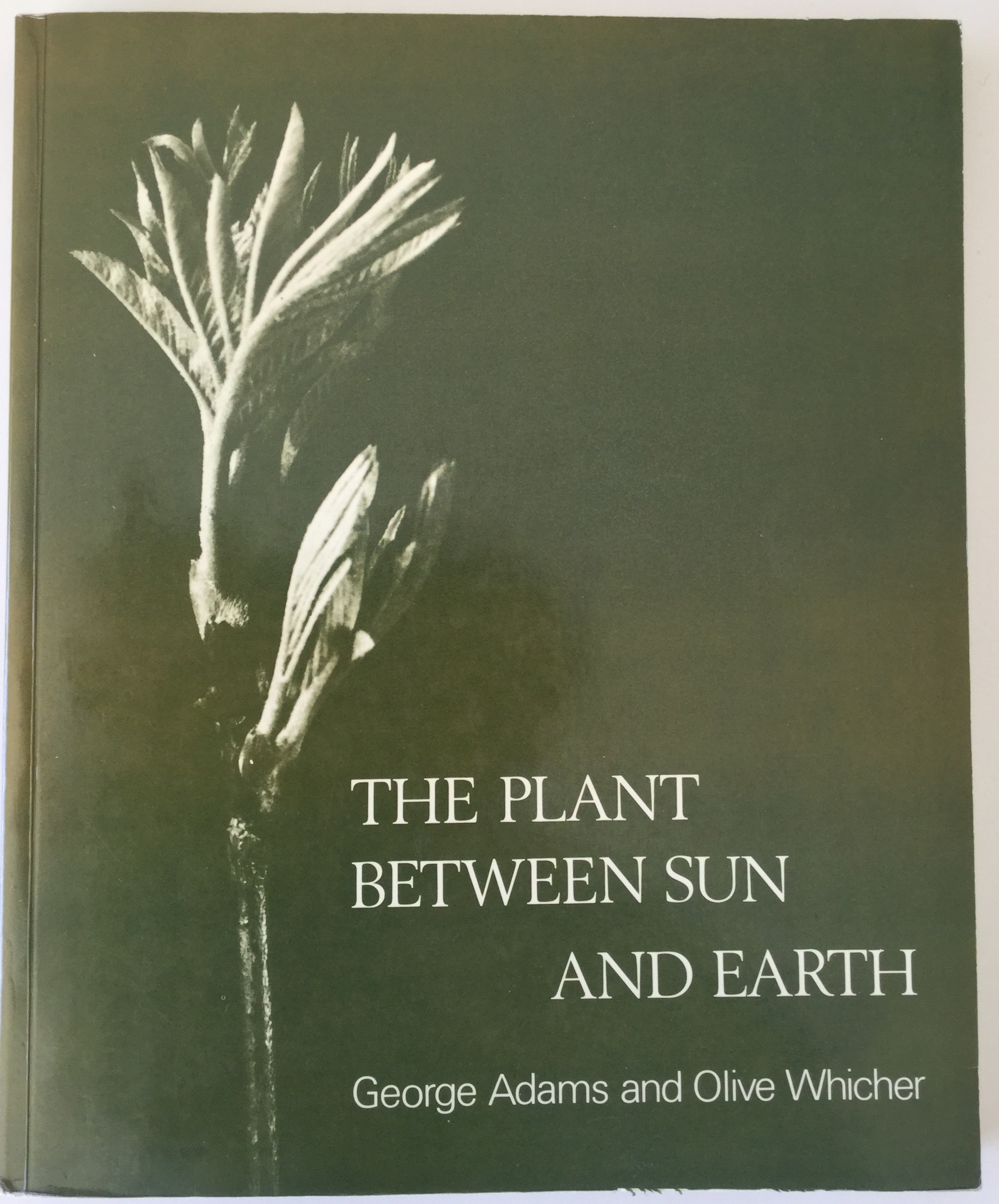 Image for The Plant Between Sun and Earth: and the Science Physical and Ethereal Spaces